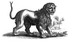 Manticore, or Martigora